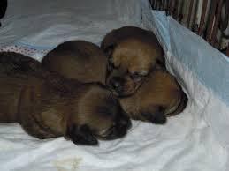 cani in cerca di casa canile di diecimo lu teneri cuccioli in cerca di casa tg cani