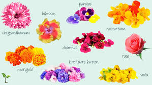 flowers edible make food come alive with herbs and edible flowers aspetuck news