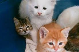 Wildfire Marketing Victoria Bc by Video Homeless Kittens Rescued From Evacuated B C Wildfire