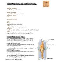 Human Anatomy Terminology This Is An Introduction To Human Anatomy Directional Terminology
