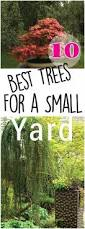 Small Backyard Trees by Backyards Compact 10 Best Trees For Small Yards Making Diy Fun