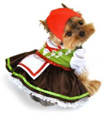 Halloween Costumes Yorkies Keepin U0027 Cute Costumes Dog Yorkies