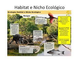 si e habitat ecologia ecologia ecologia é o estudo das relações dos seres