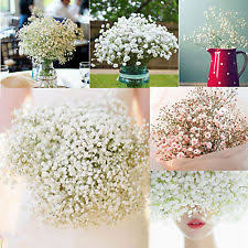 silk baby s breath baby s breath synthetic floral décor ebay