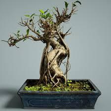 3d model realtime bonsai tree cgtrader