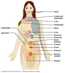 Visceral Somatic Reflex Ch 14 Ans Gross Anatomy