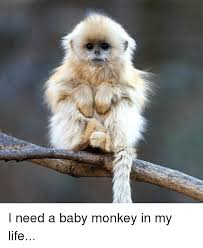 Baby Monkey Meme - i need a baby monkey in my life baby it s cold outside meme on