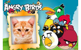 photo frames angry birds