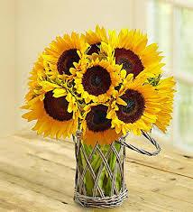 Sunflower Bouquets Sunflower Bouquet 10 Stems Free Vase With Wicker Glass Vase