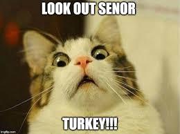 Scared Memes - scared cat meme imgflip