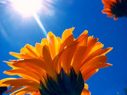 as a flower to the sun huffpost