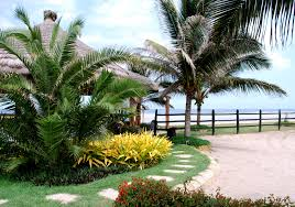 images about backyard oasis landscaping ideas latest tropical for