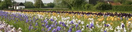 howard nurseries helmsley walled garden