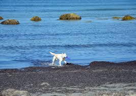Rhode Island beaches images The 10 best beaches in rhode island jpg