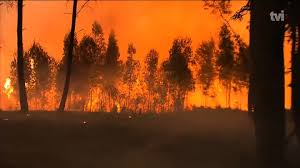 Wildfire Social Media App by Portugal Wildfire 62 Killed Victims Burned In Cars As They Fled