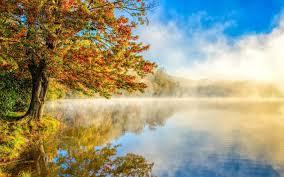 1500x500 lovely autumn tree lake foggy header photo