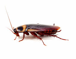 roaches seitz brothers