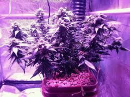 what is the best lighting for growing indoor best led grow lights 2021 top 10 picks for growing indoors