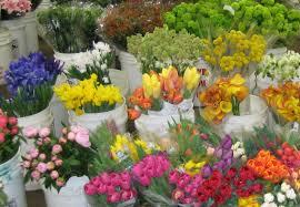 wholesale flowers near me of flowers homeca