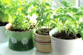 Potted Herb Garden Ideas Herb Garden Container Indoor Gardens A Herb Indoor Container Herb