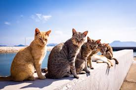 Cat Photo Album Animals That Look Like They U0027re About To Drop The Hottest Albums Ever