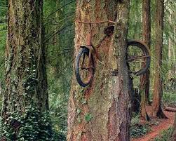 a bicycle eaten by a tree neatorama