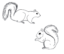 squirrel tattoo chuck does art coloring sheets grey squirrels