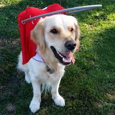 Halo For Blind Dogs Blind Dog Halo Harness Best Blind 2017