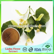 linden flower linden flower extract linden flower extract powder linden flower