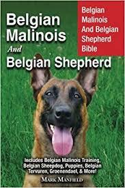 belgian sheepdog puppy belgian malinois and belgian shepherd belgian malinois and