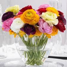 ranunculus flower longfield gardens ranunculus tomar mix bulbs 25 pack 10000245