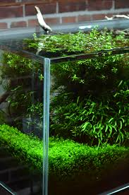 Aquascape Shop Aquarium Zen
