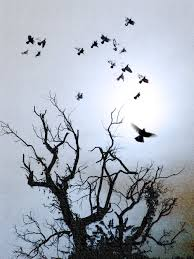 surreal nature photograph of promise flying birds tree silhouette