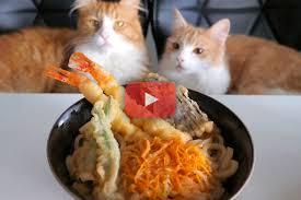 cuisiner japonais envie de cuisiner japonais la chaine jun s kitchen vous