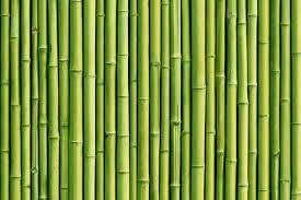 green bamboo sticks wallpaper wall decor