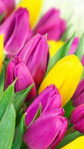 wallpaper bunga tulip wallpaper iphone tulips pinterest wallpaper flowers and