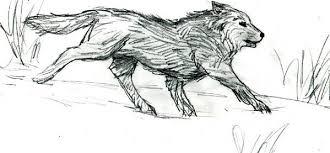 running wolf sketch by auruyanwaya on deviantart