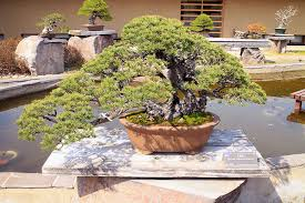 tiny trees the of bonsai in omiya koen places to visit in