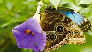 Adaptations Of Tropical Rainforest Plants - butterflies and plants designers of tropical rain forest