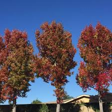 fall carlsbad leaves change color