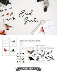 print the bird identification chart hang up next to window image