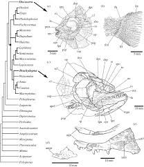 a new time scale for ray finned fish evolution proceedings of