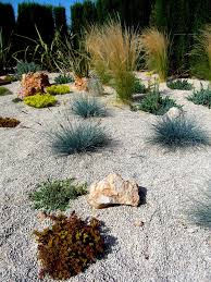 blue fescue grass look other metro mediterranean landscape