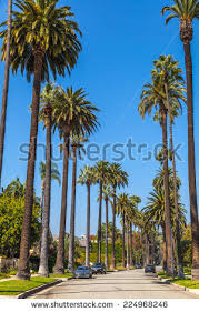 palm trees beverly los stock photo 208696519
