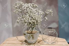 baby s breath flowers glass vase with bunch of gypsophila baby s breath flowers on