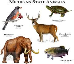 Michigan wildlife images Wildlife art state animals jpg