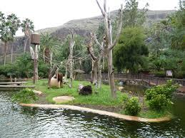 bentley orangutan palmitos park photo galleries zoochat