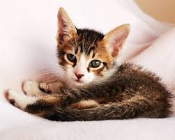 Kitten Bed Cat Behavior 10 Reasons Why Your Cat Brings Her Kittens Into Your Bed
