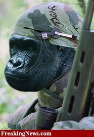 Gorilla Warfare Meme - gorilla warfare copypasta