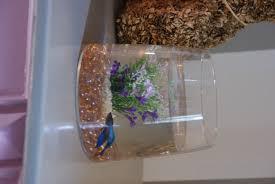 idee deco aquarium petit aquarium rectangulaire un petit aquarium original de